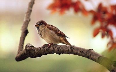 bird in neighbourhood